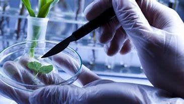 GMO Cannabinoids? Lab-grown CBD? The Future of Cannabis Production
