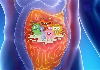 Gut Microbiota & the Endocannabinoid System