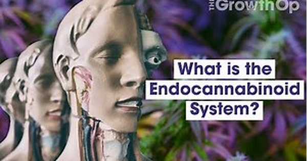 What is the Endocannabinoid System or ECS?